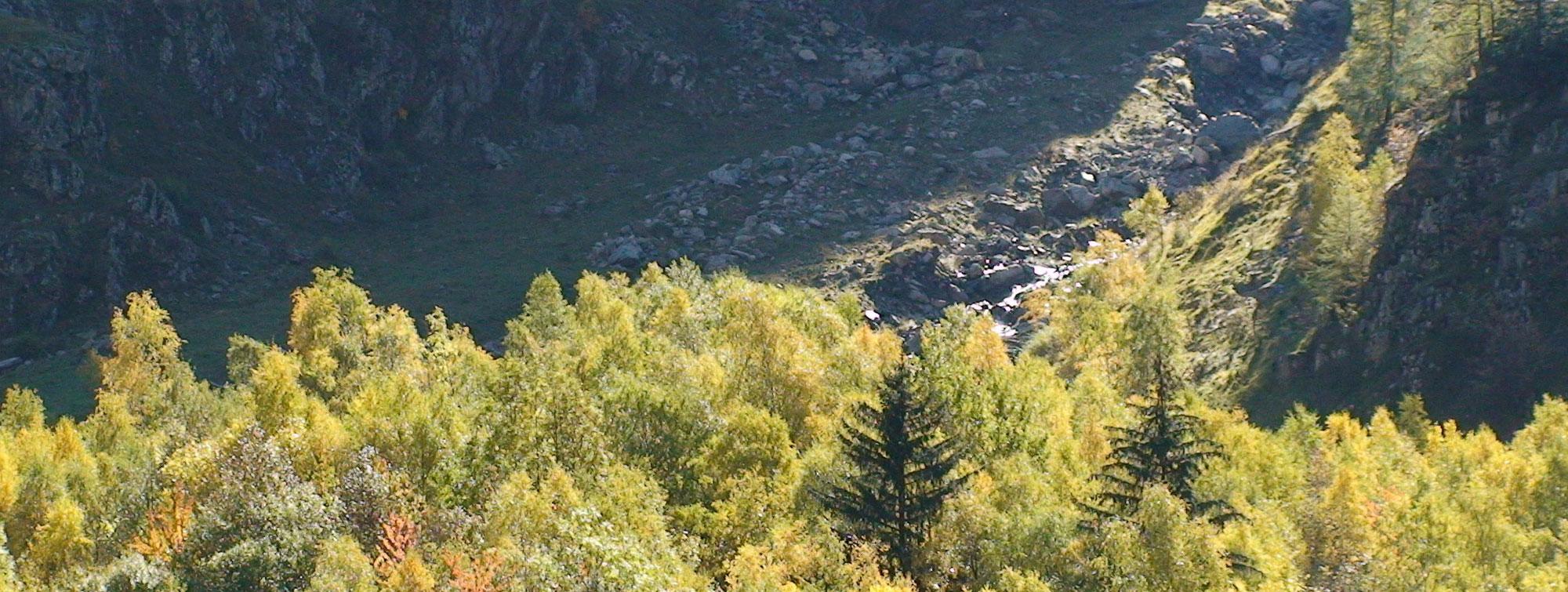 La forêt au pied de la montée du col de Vaurze au Désert de Valjouffrey face à la chambre d'hôte Les épilobes