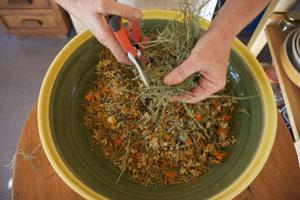 Tisane : Mélange de plantes séchées avant mise en sachet