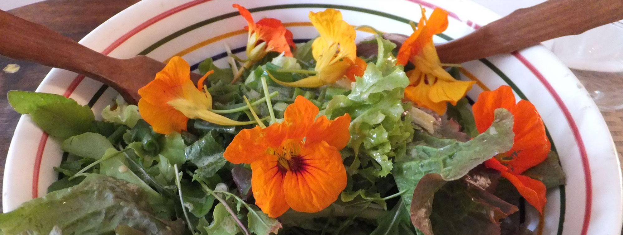 salade aux fleurs de capucine à la table d'hôte Les épilobes